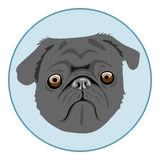 Digital vector pug dog face, in blue circle Royalty Free Stock Image