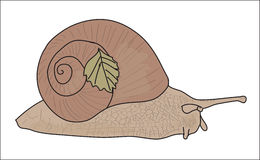 Digital vector snail with a small leaf Royalty Free Stock Photo