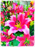Digital watercolor of pink lilies Royalty Free Stock Photo