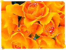 Digital watercolour of a bouquet of orange roses. Digital watercolour painting  of a bouquet of orange roses Royalty Free Stock Photo