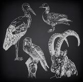 Digital-Zeichnung des Storchs, des Falken, der Gans und der Ziege Stockfotos