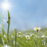 Süßes Gras Stockfoto