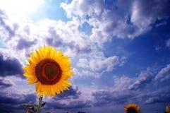 digitala blommor Arkivbilder