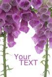 Digitale Image stock
