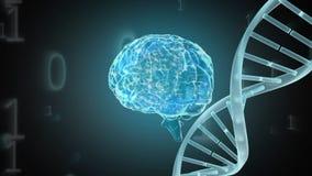 Digitale animatie van hersenen en een DNA-schroef stock illustratie