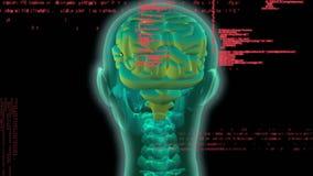 Digitale animatie van menselijke hersenen royalty-vrije illustratie
