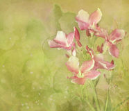 Digitale het Schilderen van de Tuin van de bloem Achtergrond Royalty-vrije Stock Foto