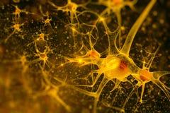 Digitale illustratieneuronen Stock Afbeelding