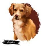 Digitale Kunstillustration Alopekis-Zucht lokalisiert auf Weiß Nettes inländisches reinrassiges Tier Brown-Hund mit weißem Hals Stockbild