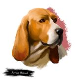 Digitale Kunstillustration Artois-Jagdhunds lokalisiert auf weißem Hintergrund Artois-Jagdhund ist eine seltene Zucht des Hundes  Stockbild