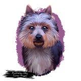 Digitale Kunstillustration der australischen seidiges Terrier-Hündchenzucht lokalisiert auf Weiß Populäres Welpenporträt mit Text stock abbildung
