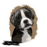 Digitale Kunstillustration der Boxerhündchenzucht lokalisiert auf Weiß Populäres Welpenporträt mit Text Nette Haustierhand gezeic stock abbildung