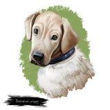 Digitale Kunstillustration der Broholmer-Hündchenzucht stock abbildung