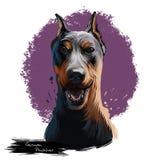 Digitale Kunstillustration der deutschen Pinscherhunderasse lokalisiert auf Weiß Populäres Welpenporträt mit Text Nette Haustierh stock abbildung