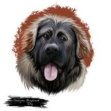 Digitale Kunstillustration der georgischen Schäfer-Hunderasse lokalisiert auf Weiß Populäres Welpenporträt mit Text Nette Haustie stock abbildung