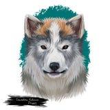 Digitale Kunstillustration des kanadischen Eskimohundehaustieres stock abbildung