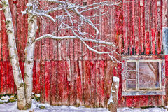 Digitally altered red barn. Tree in front of a red weathered barn, Stowe, Vermont, USA Royalty Free Stock Photo