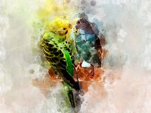 Love birds - green and blue budgie kissing - watercolour vector illustration
