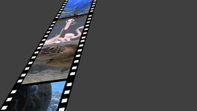 Film strip with videos. Digitally generated animation of film strip containing different videos of nature and animals stock footage
