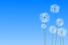 Digitally generated dandelions against blue sky Royalty Free Stock Image