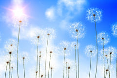 Digitally generated dandelions against blue sky Stock Photography