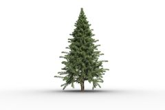 Digitally generated green fir tree Royalty Free Stock Photo