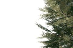 Digitally generated green fir tree Stock Photography