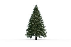 Digitally generated green fir tree Stock Photo