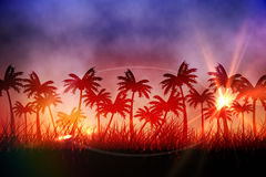 Digitally generated palm tree background Royalty Free Stock Photography