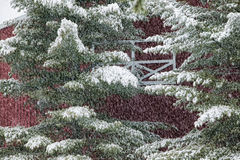 Digitally manipulated image of a snow covered pine tree in front Royalty Free Stock Photography