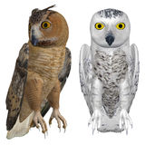 Eagle and snowy owls Royalty Free Stock Photos