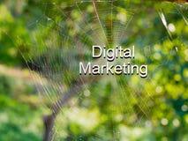 Digitas que introduzem no mercado o texto 3d no fundo da Web de aranha, Internet março Fotografia de Stock Royalty Free