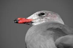 Dignità del `s dell'uccello Fotografie Stock Libere da Diritti