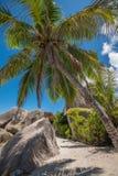 Пальма кокоса Сейшельских островов и валун гранита, Ла Digue Стоковые Фотографии RF