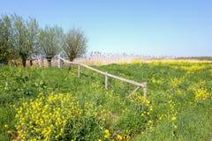 Digue avec des fleurs de colza pendant le printemps images stock