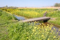 Digue avec des fleurs de colza pendant le printemps photographie stock libre de droits