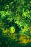 Dik bos stock afbeeldingen