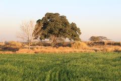 Dik gebladerte van een majestueuze boom in het land royalty-vrije stock afbeelding