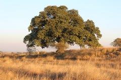 Dik gebladerte van een majestueuze boom in het land royalty-vrije stock foto