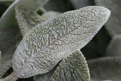 Dik witte bladeren Royalty-vrije Stock Afbeelding