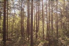 Dik zonnig bos Stock Afbeelding