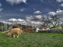 dikanka在安排附近的农厂gogol 库存图片