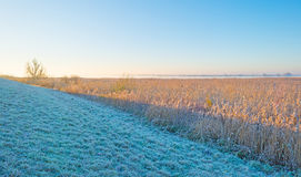 along a frozen lake at sunrise Royalty Free Stock Photography