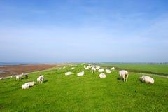 Dike mit Schafen bei holländischem Ameland lizenzfreies stockbild