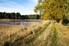 Dike pond with alley of larch Royalty Free Stock Image