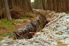 Diket i pinjeskogen, spåret för att lägga kabel i skogen, förstörelsen av miljön royaltyfri foto