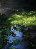 Dikke lagen van kruid het groeien in een moeraskreek Stock Afbeelding