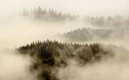 Dikke mist op bergbovenkant en boombovenkant in Alaska Stock Afbeeldingen