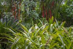 Dikke wildernisinstallaties in groene en rode kleuren Stock Afbeelding
