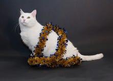 Dikke witte kat met gele ogen die op zwarte zitten  Stock Afbeelding